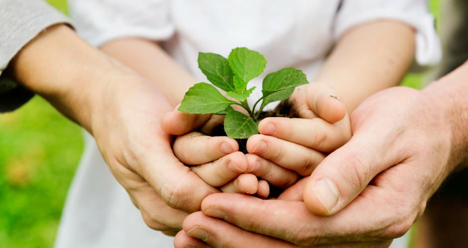 A DIY Herb Garden Encourages Kids to Eat Veggies